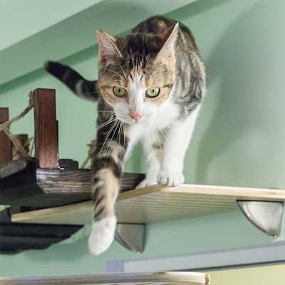 reservations-cat