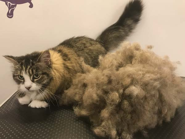 shedding-treatment
