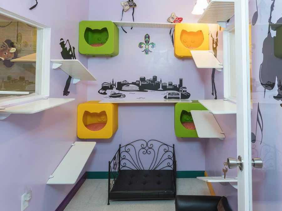 happy-cat-room-design-20201006-008